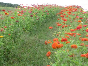 flowersatwindflowerfarm