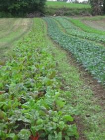 veggiesatwindflowerfarm