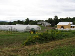 windflowerfarm