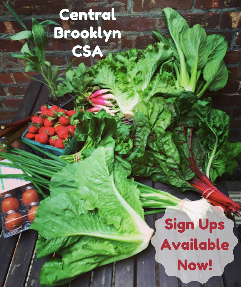 Central Brooklyn CSA Sign-ups Available